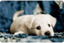 Cute / by Kim Roller