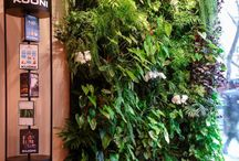 Mur végétal Intérieur / Vertical garden also known as green wall or living wall. A compilation of our indoor green wall projects, etc.