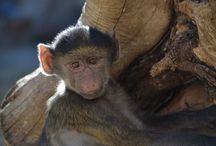 Baby Baboons / http://babybaboons.webnode.hu/