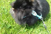 Meine Kaninchen: Lollie und Muckl