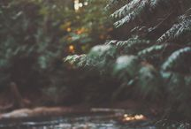 AFFICHES WILD NATURE