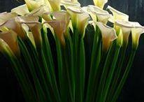 arrangement / 過去にオーダー頂いたアレンジメントです。時期によって花材、器など変更する場合があります。
