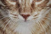 Коты не мои