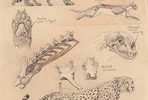 Anatomia animale