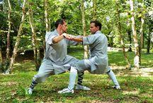 Shaolin / Raccolta di tutte le nostre foto Shaolin divise per anno