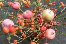 Apfelwoche