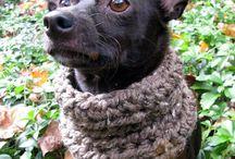 crochets pour chiens et chats