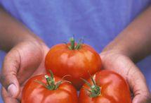 Gardening - Veggies / by Haley Wertz