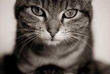 cats, cats & cats ❤