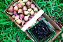 Upstate South Carolina Farms / Farms and fresh produce near the Clemson area
