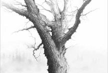 Trees / My drawings in pencil and coal with wash and gouache.