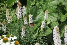 Butterfly Garden / A wonderful time of year to see butterflies in the Gardens & Grounds of Herstmonceux Castle