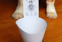 Fruit Fly, Ants, Spiders.....be gone
