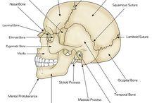 Anatomy draw and Medicine interest