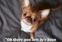 i cani più belli ma non più di Virgola