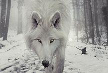 Animales / animales ≧ω≦