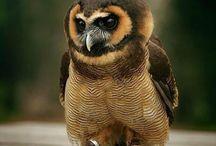 Ptaki na poprawę nastroju :)