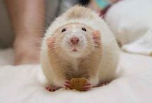 Rats <3