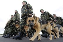 Animals in the forces