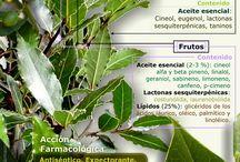 Usos de las plantas