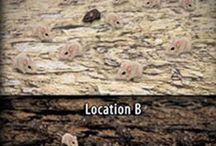 Biology : Natural selection