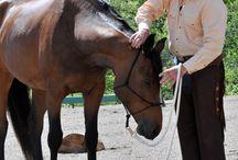 Horse - groundwork