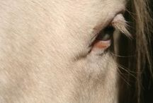 Great Horses / beautiful pictures of horses of all breeds