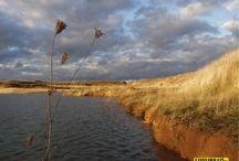 Stod, cihelna 2002-2004 / Rekultivace vytěžených ploch cihelny ochudila nově vznikající krajinu o nádhernou rozmanitost flory a fauny. Dnes je zde pouze jedntvárné pole,