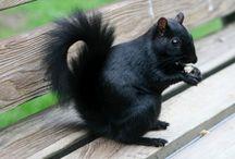LIFE: black squirrel/brown bear/tiger / Power animals