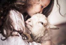 kedves drága otthoni állataink