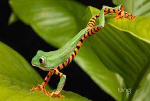 Amphibians / by Stephen