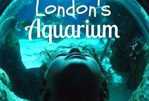 VENUE | Sea Life / Under the sea, on the Thames