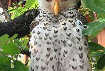 Sowy/Owl
