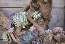Raised Succulent Garden Ideas