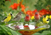 Feathered friends....!
