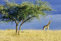 National Park - Serengeti