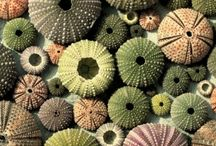 Textiles / Nature
