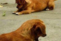 <3 animalssss <3