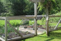 Gardening / by Denenne Craig