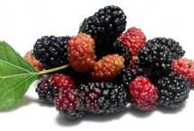 eat mulberry lower cholesterol naturally
