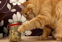 Cat Treats / by Jane Young