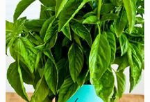 Kalyn's Kitchen Cooking Tips for Gardeners / Kitchen tips from Kalyn's Kitchen geared towards people who are growing their own vegetables or herbs / by Kalyn's Kitchen
