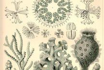 microbiologi illustrasjoner