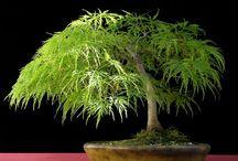 Beautiful Bonsai....