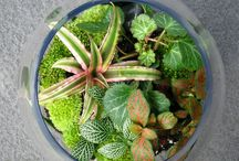 Sweet Terrariums / Gardens in containers and bottles.