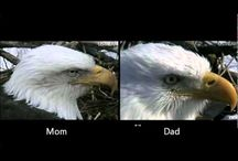 Eagles / All about eagles