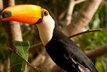 Fauna no Brasil / Fauna nas Pousadas, Hotéis e Resorts no Brasil.