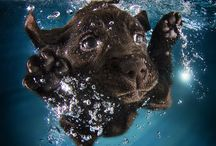 Underwater Dogs**