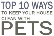 Pet Care / Ideas on how to make your house more pet friendly. together we discover...