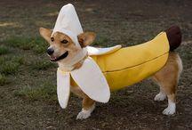 Pets in Halloween costumes